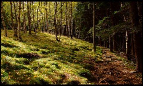 Zdjecie POLSKA / Góry Opawskie / Wejście na Biskupą Kopę ,szlak czerwony / ścieżka