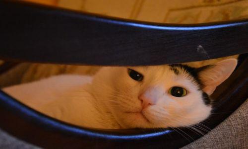 Zdjęcie POLSKA / Polska / dom / mój kot - też zwierzę