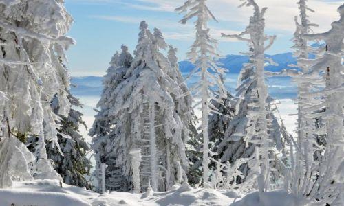 Zdjęcie POLSKA / Gorce / Turbacz / Kraina śniegu