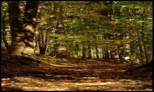 Zdjęcie POLSKA / Góry Opawskie / Wejście na Biskupą Kopę ,szlak czerwony / jesień