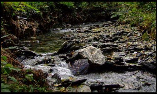 Zdjęcie POLSKA / Góry Opawskie / Wejście na Biskupą Kopę . / strumień
