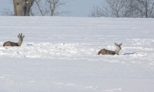 Zdjecie POLSKA / Pomorskie / Pomorskie / Po pachy w śniegu