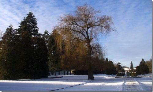 POLSKA / kujawsko pomorskie / w kurorcie / Zima w parku