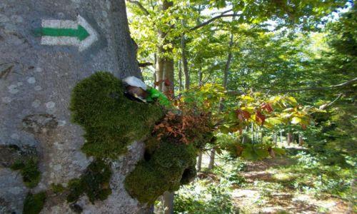 Zdjecie POLSKA / Beskid �l�ski / szlak ze Starego Gronia do Brennej-Le�nicy /