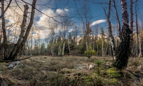 Zdjęcie POLSKA / Kaszuby / Kokoszki / w kaszubskim lesie