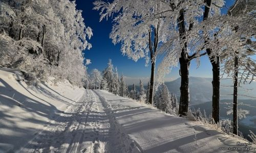 Zdjecie POLSKA / Beskidy / Klimczok / Pożegnanie zimy