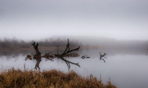 POLSKA / Pomorze / Gdańsk-Kokoszki / mgła