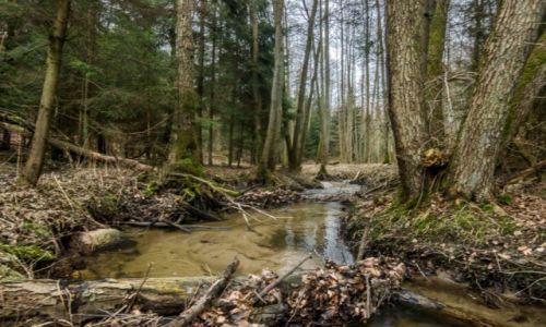 Zdjęcie POLSKA / Pomorze / Gdańsk / Rezerwat przyrody Lasy w Dolinie Strzyży