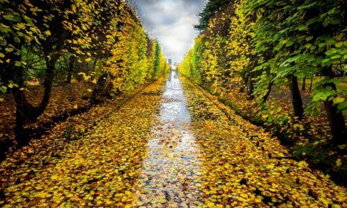 Zdjęcie POLSKA / Pomorze / Gdańsk-Oliwa / jesień idzie przez park