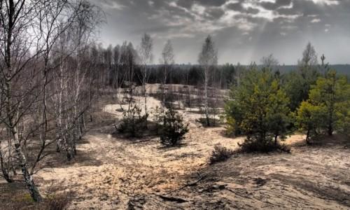 Zdjecie POLSKA / Mazowsze / Mazowiecki Park Krajobrazowy / Wydmy Mazowieck