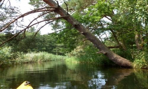 Zdjęcie POLSKA / pomorskie / Żarnowiec/Dębki / Płyniemy pod walącymi się drzewami ;-)
