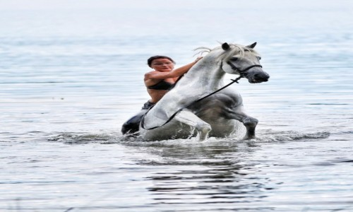 Zdjecie POLSKA / - / Kaszuby / Koń w wodzie dęba