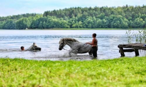 Zdjęcie POLSKA / - / Kaszuby / Konie i jezioro