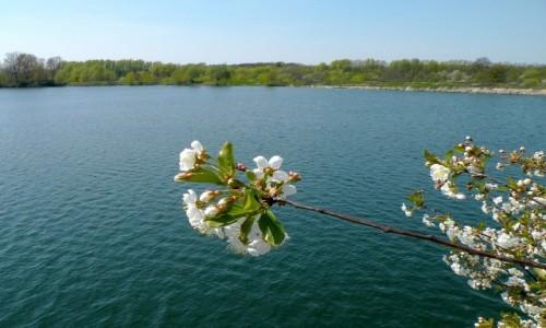 Zdjecie POLSKA / opolskie / Nad Odrą / Nie ma wątpiwości.....wiosna !!