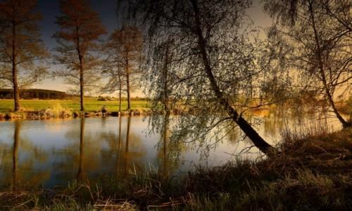 Zdjęcie POLSKA / pow-żniński / Dolina Noteci /  W promieniach zachodzącego słońca.