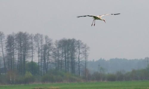 Zdjecie POLSKA / Podlasie / okolice Biebrza�skiego Parku narodowego / Dron