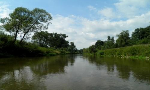 Zdjęcie POLSKA / opolskie / Rzeka Mała Panew / Brzegi porośnięte roślinnością.