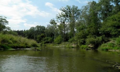 Zdjęcie POLSKA / opolskie / Rzeka Mała Panew / Przed zakrętem