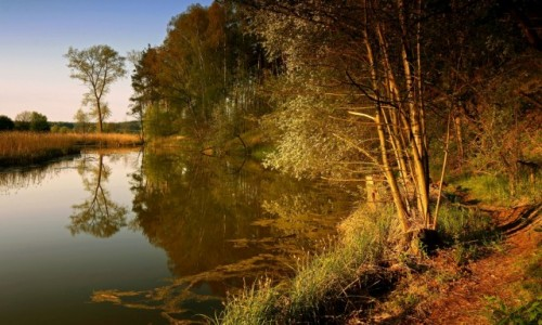 Zdjęcie POLSKA / pow-żniński / Dolina Noteci / Wzdłuż moczarów