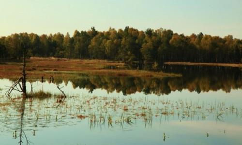 Zdjęcie POLSKA / Pomorskie / Słowiński Park Narodowy / Uroczysko Wielkie Bagno