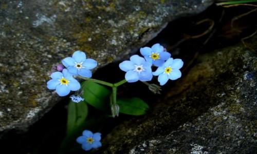 Zdjęcie POLSKA / opolskie / Malina / A mówią, że kwiaty na betonie nie rosną.