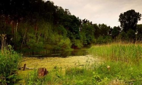 Zdjęcie POLSKA / pow-żniński / Dolina Noteci / Na bagnach