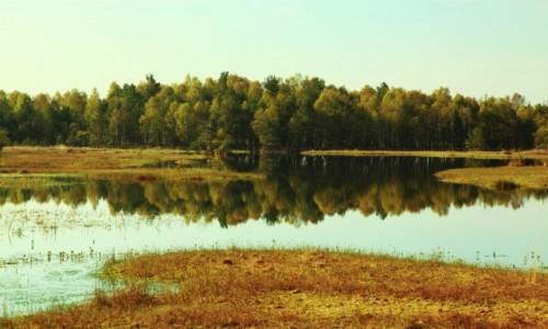 Zdjęcie POLSKA / Pomorskie / Słowiński Park Narodowy / Wielkie Bagno