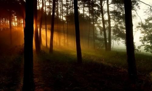 Zdjecie POLSKA / pow-żniński / Puszcza Notecka / Burze nocą,rano słońce i mgły!