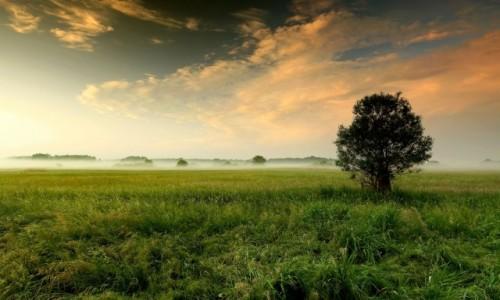 Zdjecie POLSKA / pow-żniński / Nadnoteckie łęgi / Poranny zapach trawy