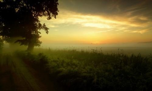 Zdjęcie POLSKA / pow-żniński / Nadnoteckie łęgi / W nocy burze z rana mgły