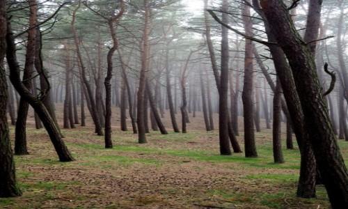 Zdjecie POLSKA / Zachodniopomorskie / Mrzeżyno / w lesie...