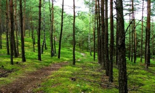 Zdjęcie POLSKA / łódzki / Bełchatów  / Piękno lasu po deszczu, wyobraźcie sobie zapch.