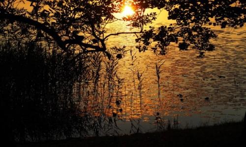 Zdjęcie POLSKA / Suwalszczyzna / Postawelek / Pozłacane jezioro