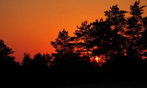 Zdjęcie POLSKA / Suwalszczyzna / Postawelek / i niebo pokryło się czerwienią....