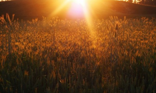 Zdjęcie POLSKA / Suwalszczyzna / Postawelek / gdy słońce nisko...