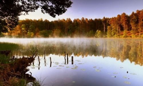 Zdjęcie POLSKA / Bory Tucholskie / Trzebciny / -W krainie mlecznej mgły
