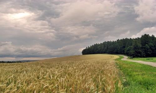 Zdjecie POLSKA / Beskid Niski / - / W drodze
