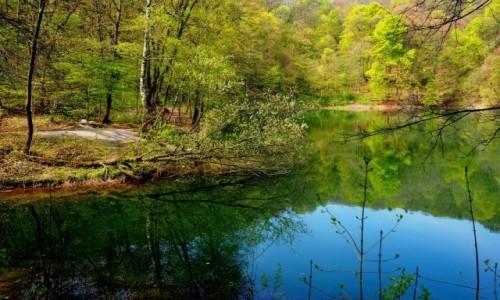 Zdjecie POLSKA / Zachodniopomorskie / Puszcza Bukowa- Jezioro Szmaragdowe / w otoczeniu przyrody...