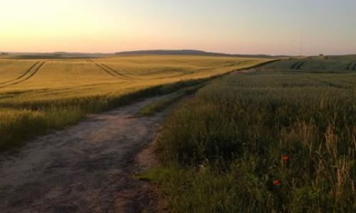 POLSKA / Pomorze / gdzies pomi�dzy polami / kaszubskimi �ciezkami...