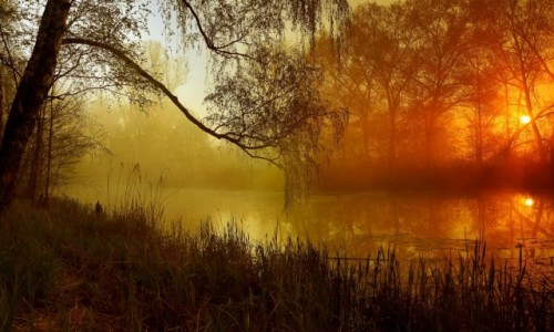 Zdjęcie POLSKA / pow-żniński / Nadnoteckie łęgi / Mgły-Inne światło,inny czas i klimat-Dolina Noteci