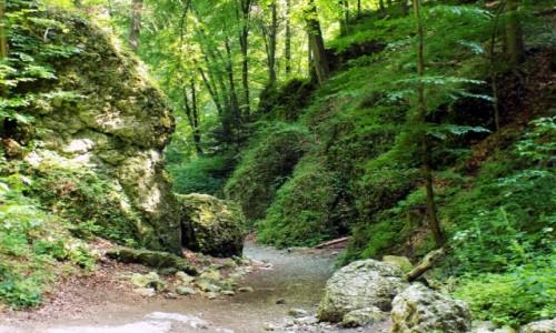 Zdjęcie POLSKA / Małopolska / Ojcowski Park Narodowy /  Wąwóz Ciasne Skałki
