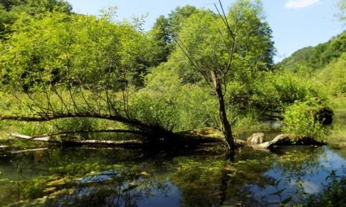 Zdjęcie POLSKA / Małopolska / Ojcowski Park Narodowy / Bobrowisko