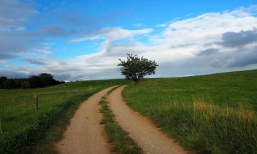 Zdjęcie POLSKA / Suwalszczyzna / Postawelek / drzewo
