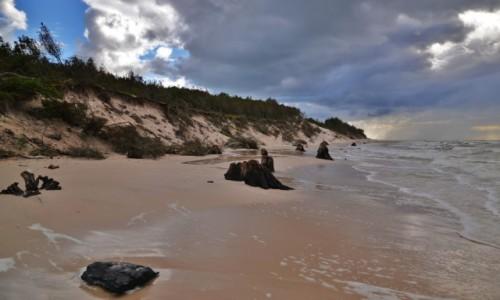POLSKA / Wybrze�e S�owi�skie / Okolice Czo�pina / Zatopiony las II