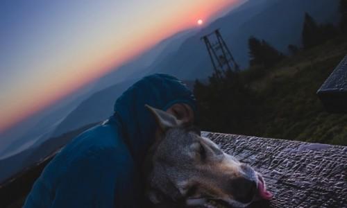 Zdjęcie POLSKA / Śląskie / Beskidy / Chwile po wschodzie słońca z wilkiem