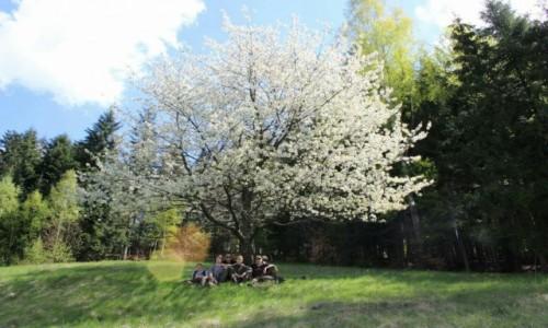 Zdjecie POLSKA / Okolice Rajczy / Beskidy / Odpoczynek
