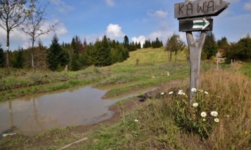 Zdjecie POLSKA / Beskid Ma�y / Potr�jna / Przyjazny szlak