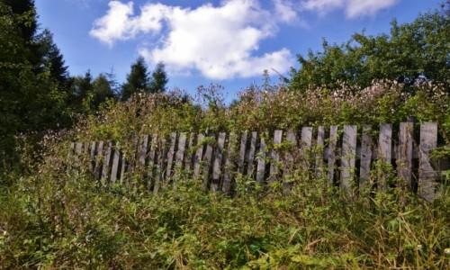 Zdjecie POLSKA / Beskid Ma�y / gdzie� przy szlaku / DSC_0558
