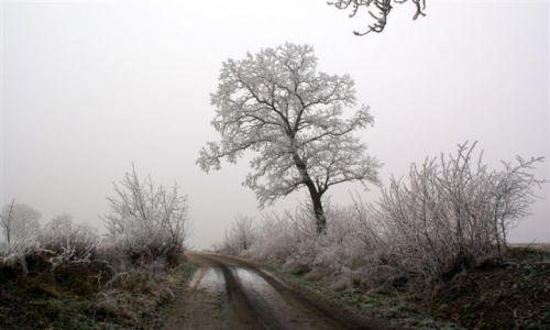 Zdjecie POLSKA / brak / gdzieś w okolicach Jastrowia.. / drzewo