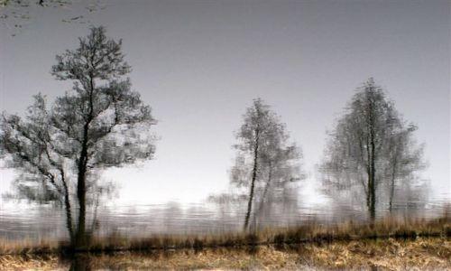 Zdjecie POLSKA / brak / gdzieś w okolicach Jastrowia.. / drzewa ..inaczej